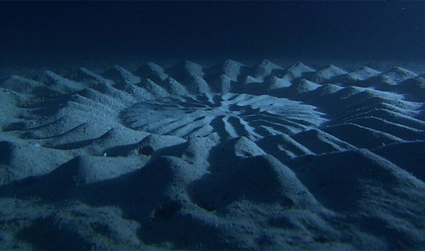 These 20 Unbelievable Pictures Might Look Like An Illusion But They Are Absolutely Real - Under-water Crop Circles