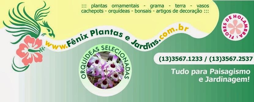 Fênix Plantas e Jardins