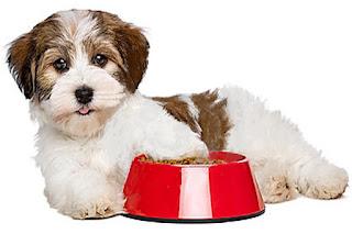 Consigli utili per l'alimentazione e la cura del cane