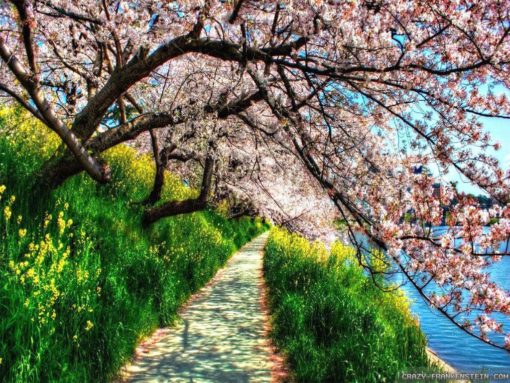 Beautiful World Nature And Love
