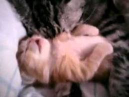 kitty video motherly love