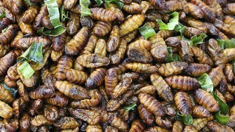 Projek jadikan serangga makanan enak