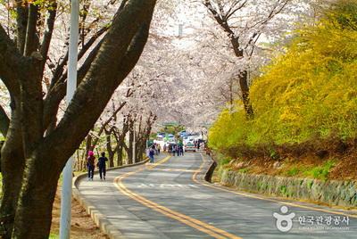 N Seoul Tower Korea trail