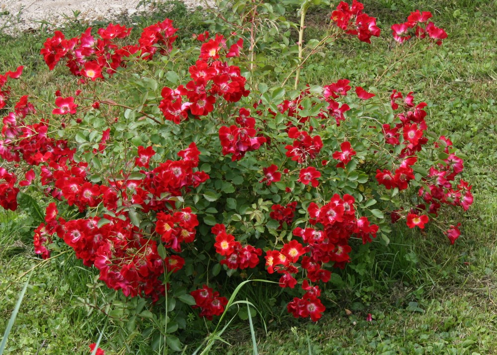 Le blog de mon doubs jardin vivaces rouges et tat d 39 me for Catalogue de plantes vivaces