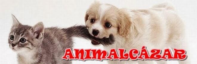 Animalcázar