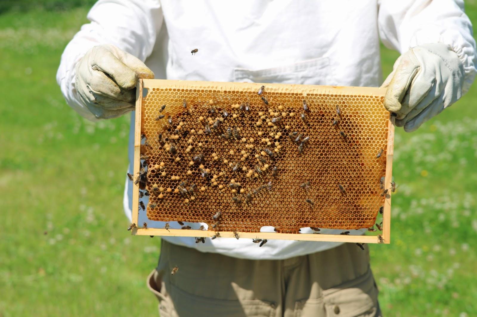 honigbienenblog time is honey ist die chefin aus dem. Black Bedroom Furniture Sets. Home Design Ideas