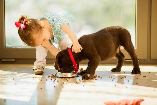 Zasady żywienia psów