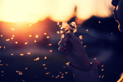 Resultado de imagem para flores voando