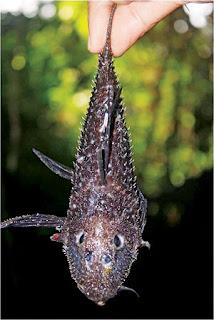 Ikan spesies baharu
