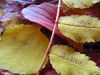 Autumn Equinox: Giving thanks, making wishes.