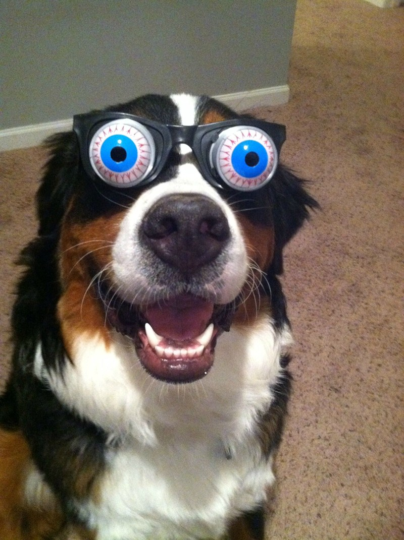 2 cute animal pics another funny dog with funny eyes