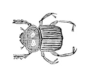 Vintage Insect Clip Art: Graphic Design of Beetle from Vintage Natural .