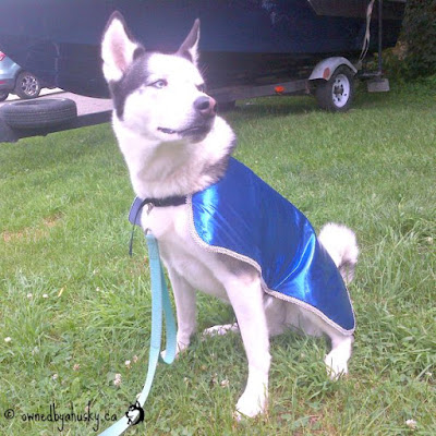 cooling coats for dogs