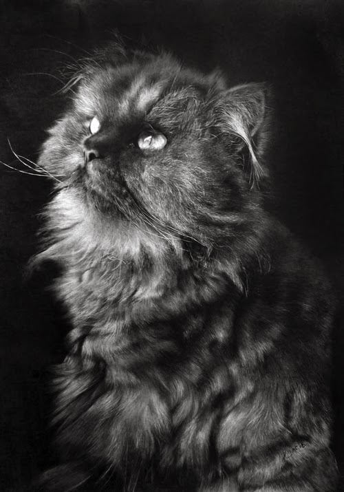 17-Hyper-realistic-Cats-Pencil-Drawings-Hong-Kong-Artist-Paul-Lung-aka-paullung-www-designstack-co