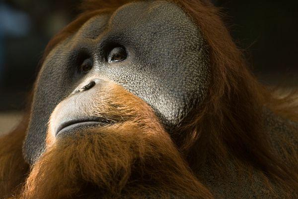 rarest animals in the - photo #17