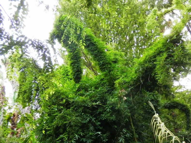 Bamb gigante en el jard n bot nico de valencia - Jardin botanico valencia ...
