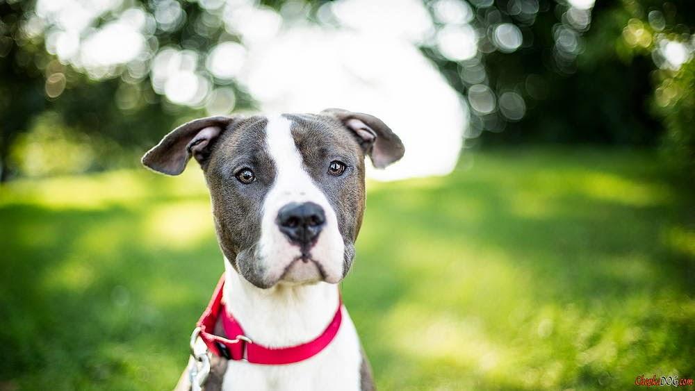 imagenes de perros bonitos