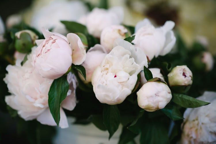 pink wedding day peonies waiting to be styled