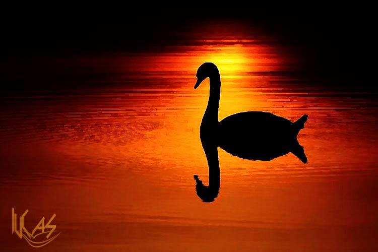 generosidad, moralidad, paciencia, esfuerzo, meditación