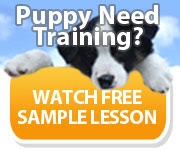 Watch a FREE video of Dove's Dog Training Session Tips