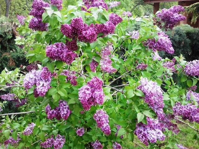 Un jard n en la sierra de madrid el lilo for Jardin lilo