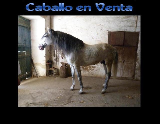 compra venta potro caballo: