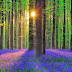 Keindahan Alami, inilah 7 Hutan Paling Memikat di Muka Bumi