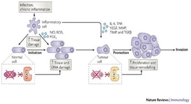 Mekanisme karsinogenesis long life learner mekanisme karsinogenesis ccuart Choice Image