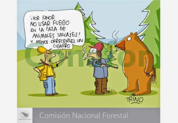 Destruccin de los bosques y selvas tropicales