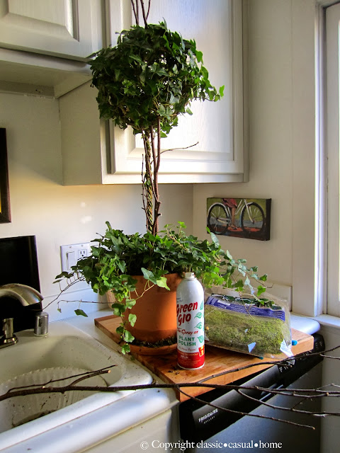 Fresh plants to replace your holiday d cor classic for Decor 67 instagram