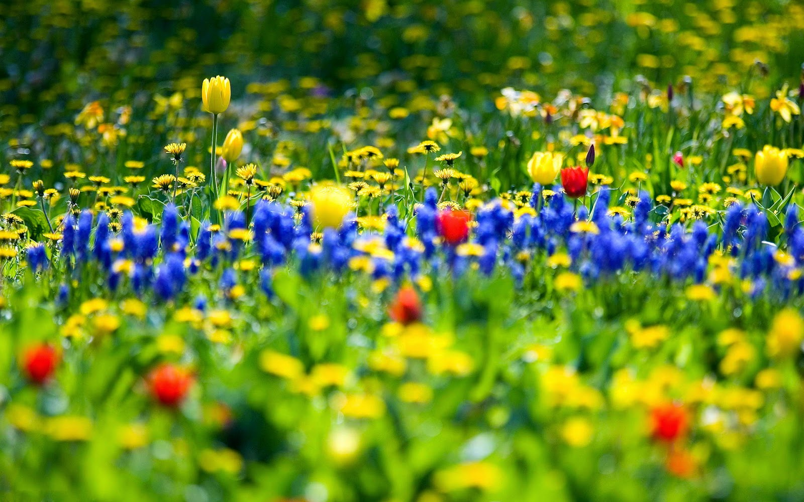 Spring Flowers New Hd Wallpapers Wallpapers
