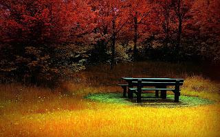 Forest Autumn Beanch Nature HD Wallpaper
