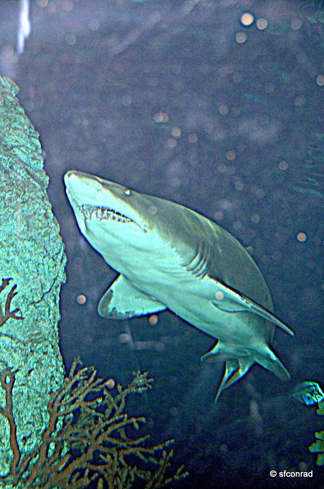 PUPPY PATHS RVing FullTime Moody Gardens Aquarium Pyramid