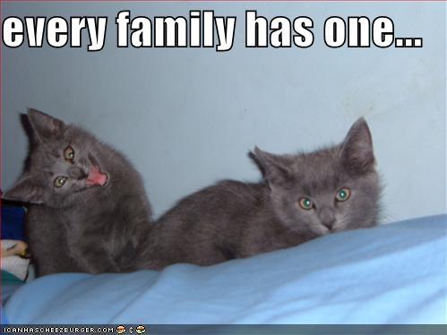 feline family fun!