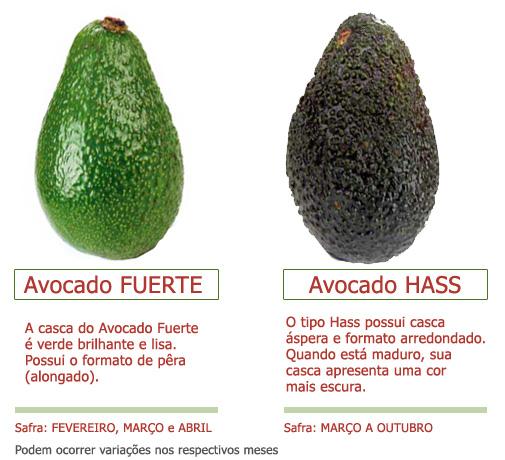 Resultado de imagem para abacate verde hass
