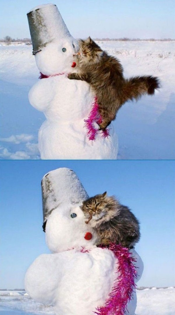 cat loves snowman, funny animal pictures of the week