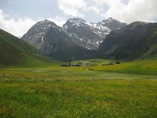 Wildflower meadow with snow-dusted peaks in the distance, Sertig Dörfli, Switzerland