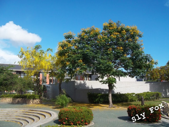 台南盾柱木