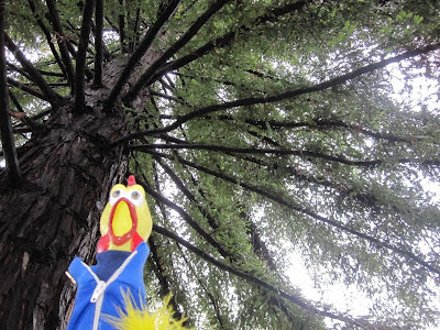 Camilla Corona at Monterey Moon Tree