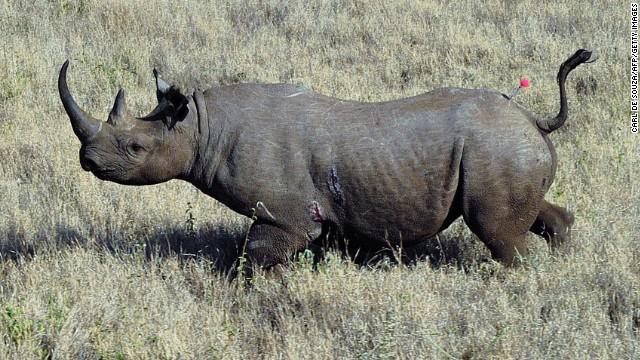 Kricpy Khera Save Rhinos