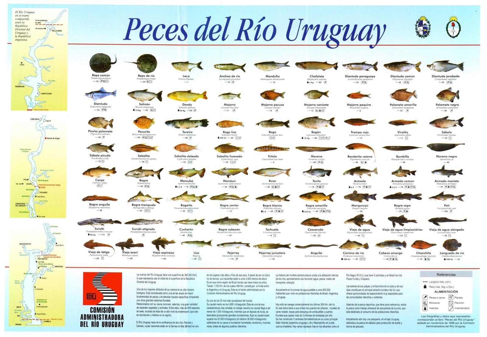 Simplemente uruguayo peces mariscos y parrilla for Variedad de peces