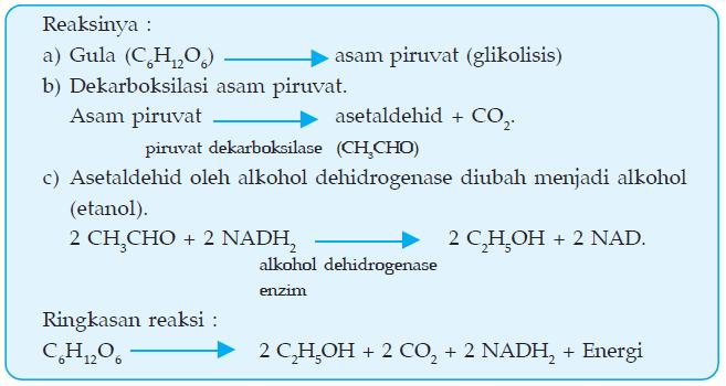 Ammalia Nur Indasari Laporan Praktikum Biologi Fermentasi Alkohol