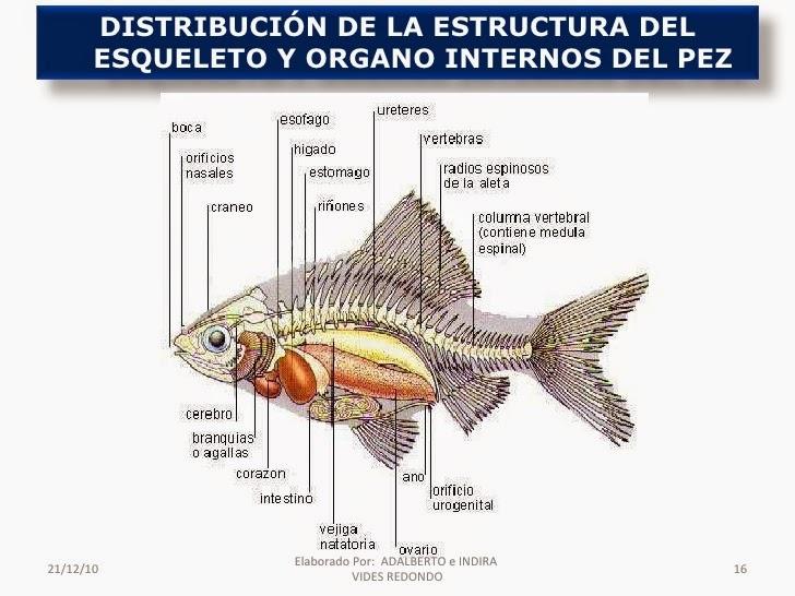 sistema urinario de peces reptiles y anfibios