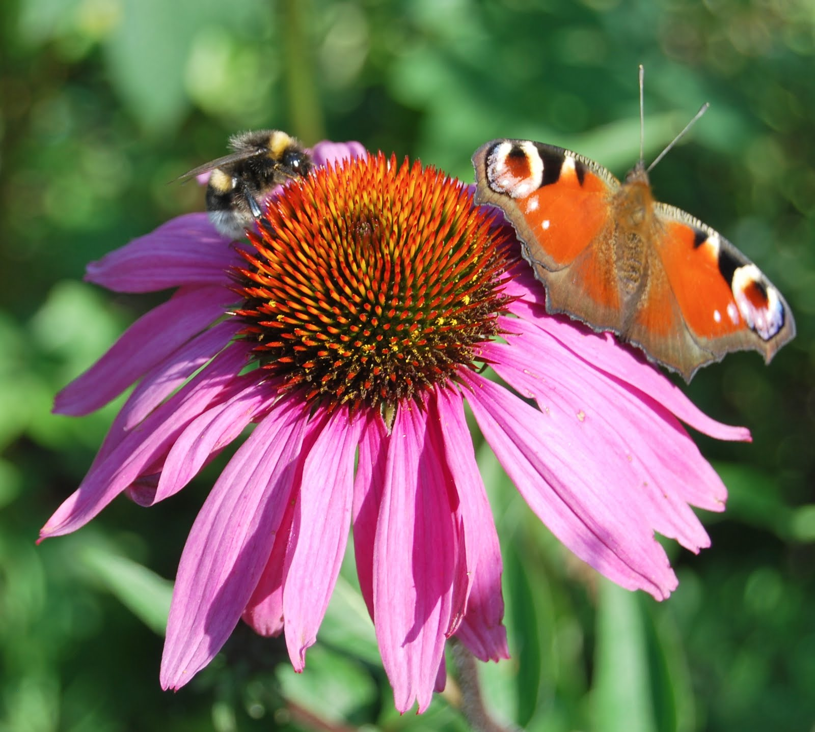 Jeg er tilmeldt: Giftfri have