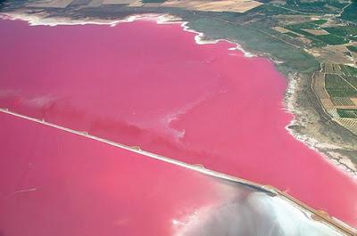 Lago Hiller rosa autralia lake hiller