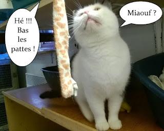 Cardamone, chatte de l'école du chat libre de toulouse.