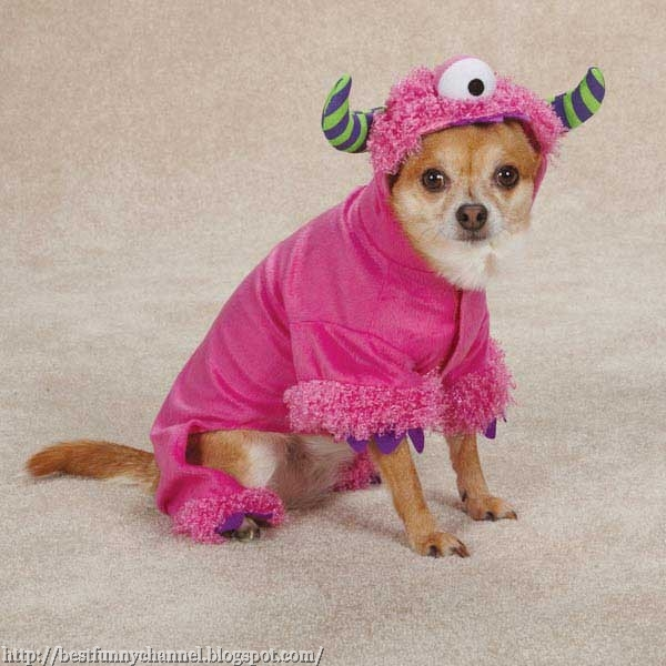 Dog  funny monster.