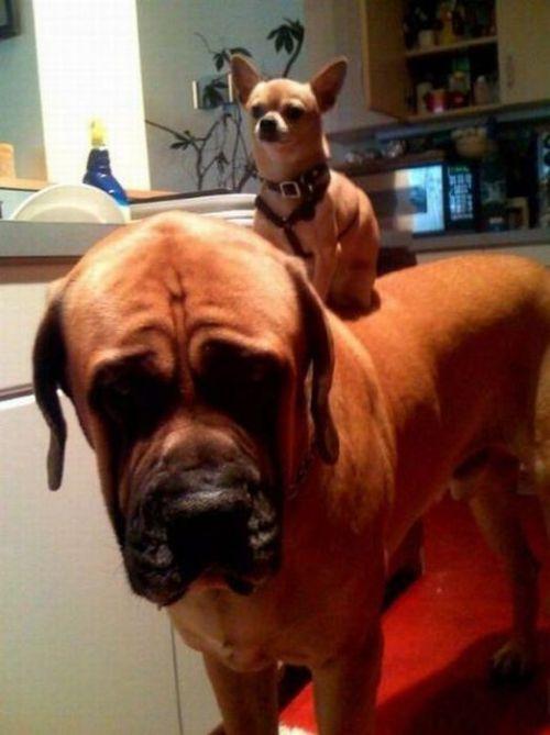Las fotos más divertidas de perros