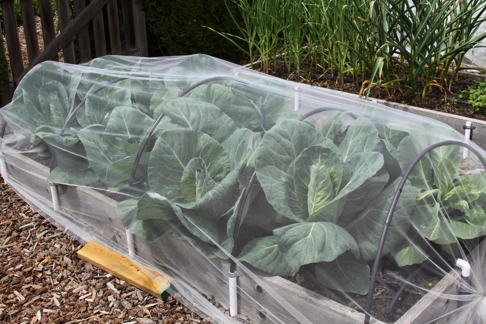 Vegetable garden update susan s in the garden