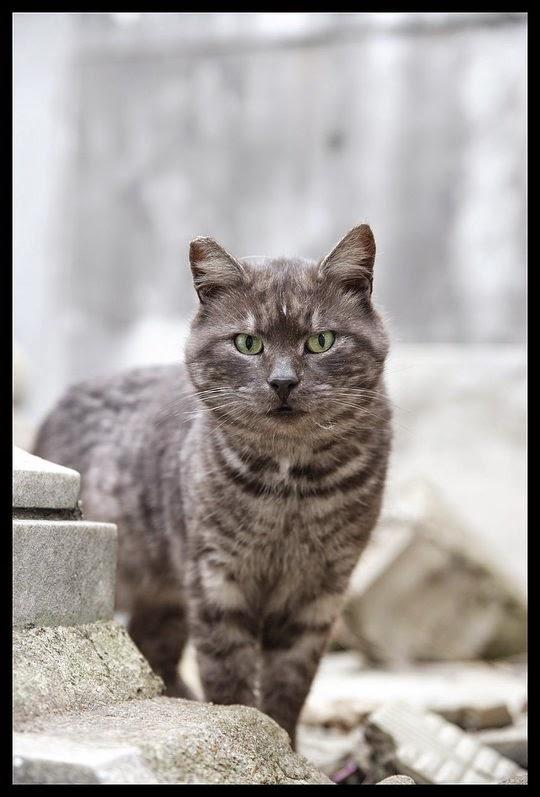 recoleta cemetery cats buenos aires